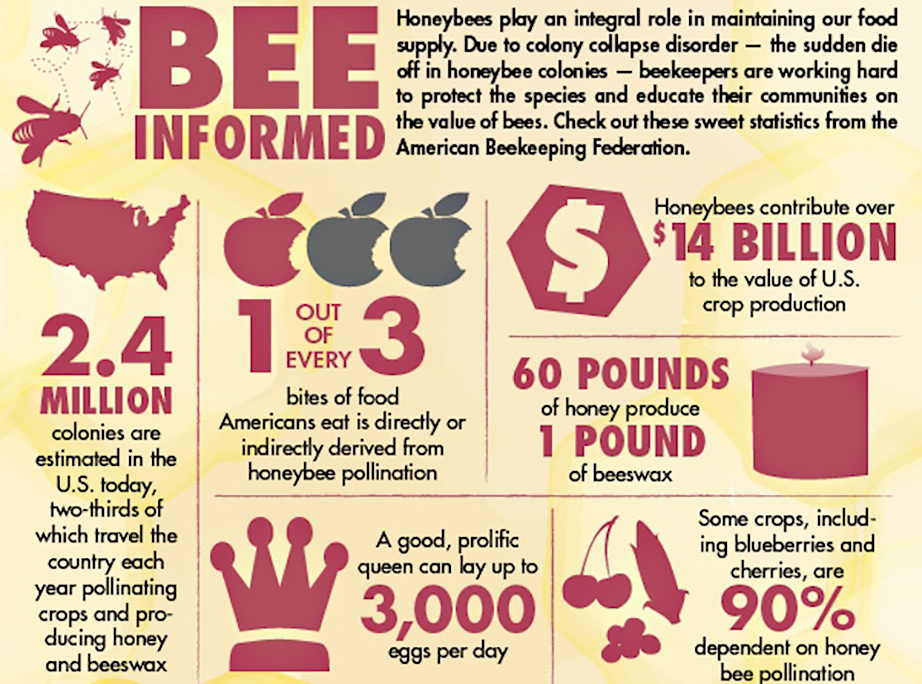 Bee Graphic (Social)