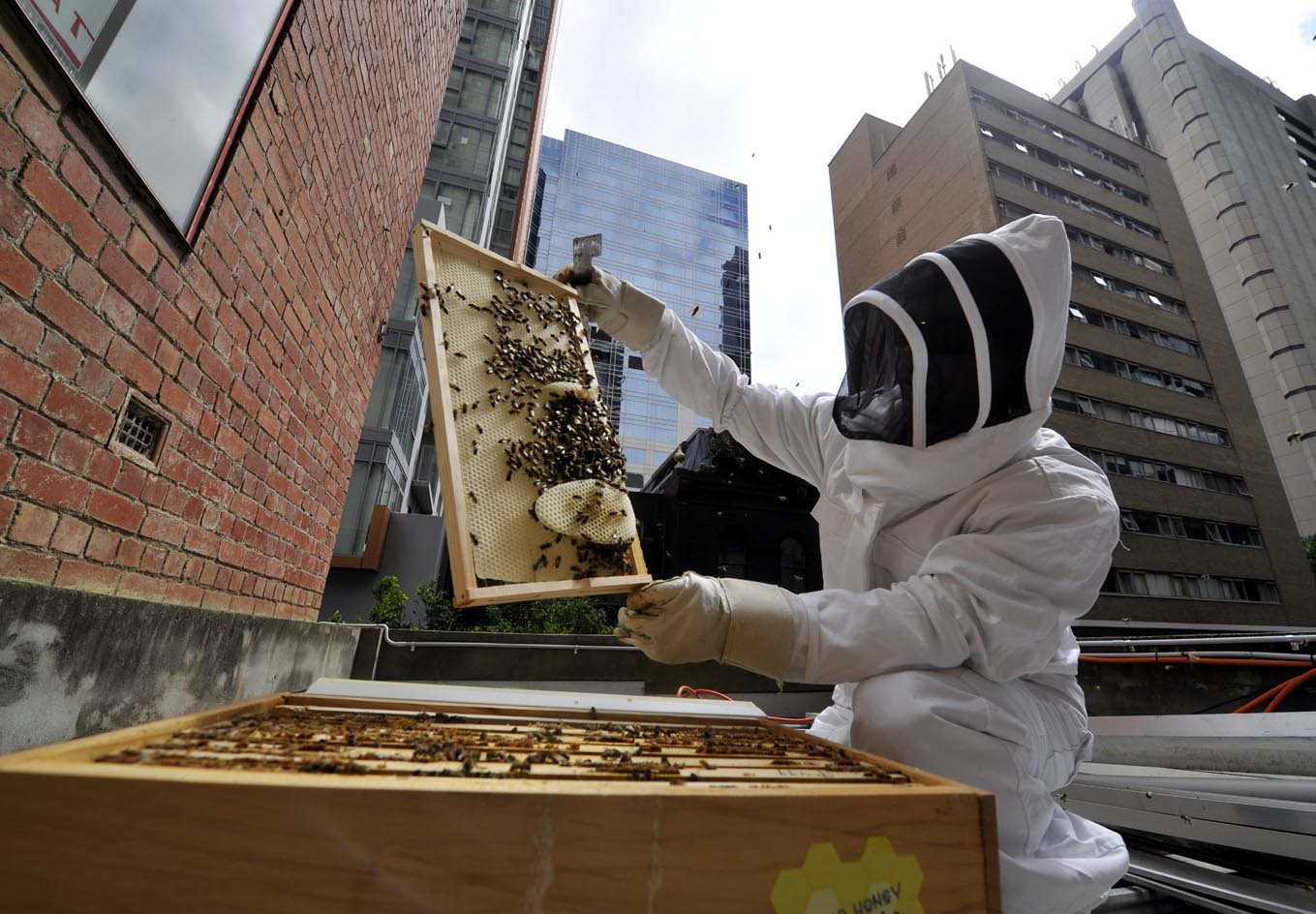 Loner Magazine - Urban Beekeeping: High-Rising Bees